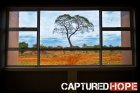 conspyr media captured hope tony elliott tree zambia northrise university